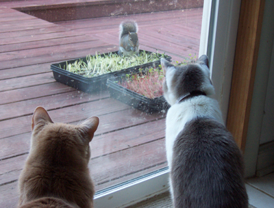 kitties watching squirrel