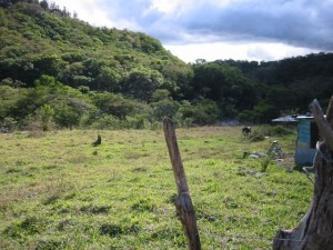 Our land in Panama